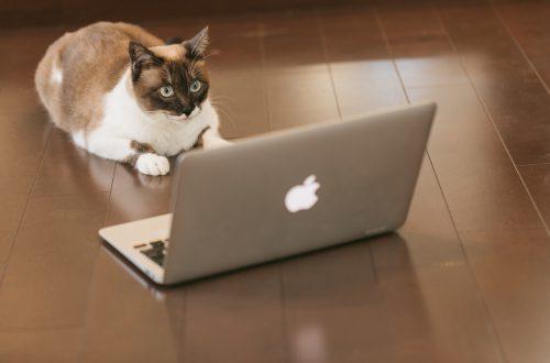 パソコンを駆使する猫ちゃん