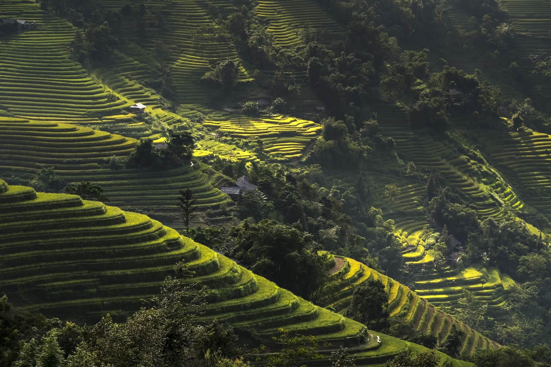ベトナム山岳地域の棚田